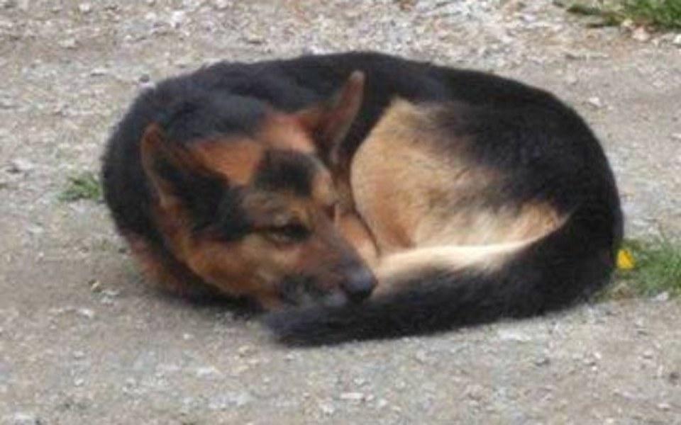 Zbiórka Ślepy pies, bez szans na dom. - zdjęcie główne