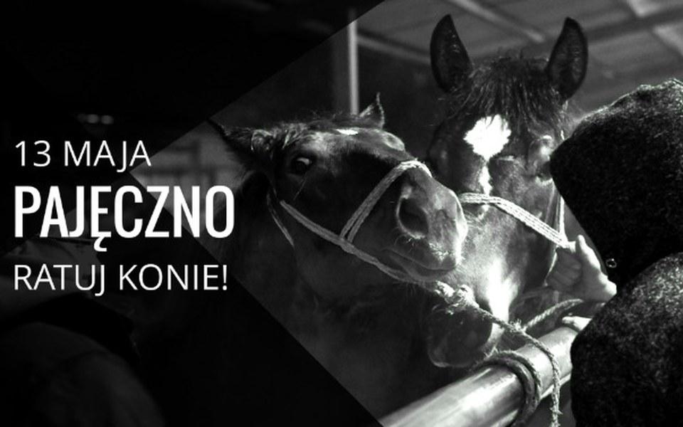 Zbiórka Pajęczno 13 maja - ratuj konie! - zdjęcie główne