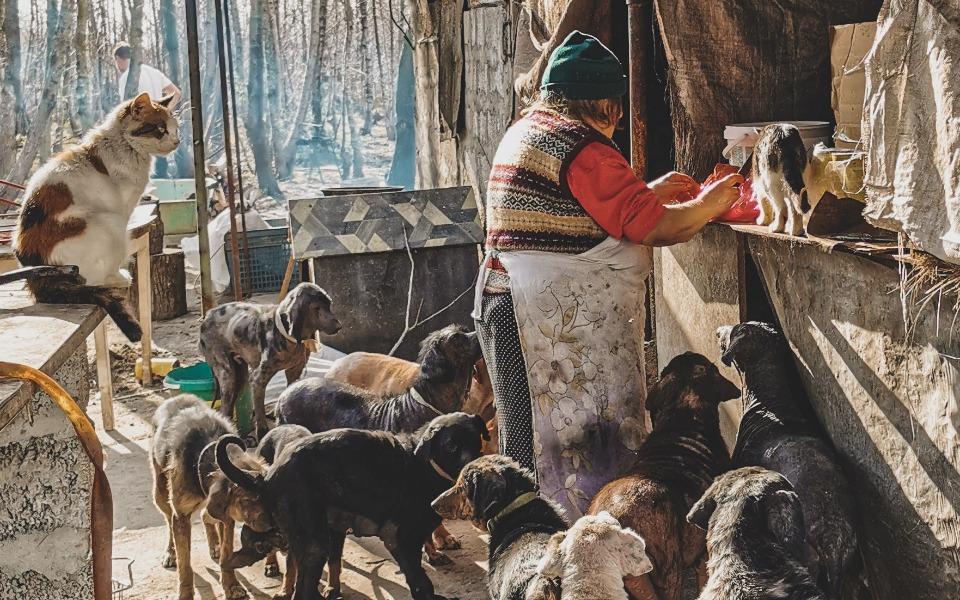 Zbiórka Zwierzęca wioska - zdjęcie główne
