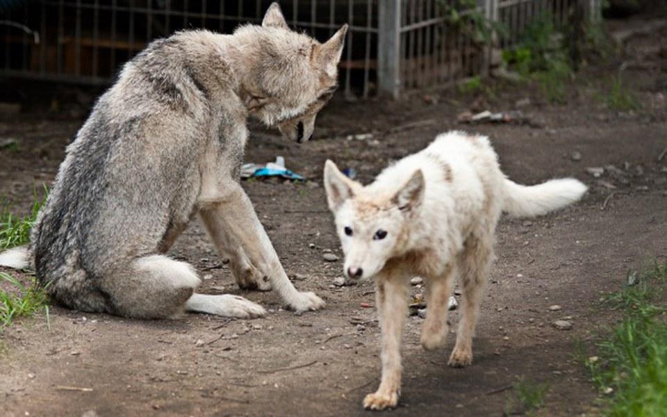 Zbiórka SPCA Podlasie - dla zwierzaków - zdjęcie główne
