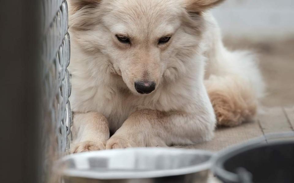 Zbiórka Jaki los czeka 300 zwierząt - zdjęcie główne
