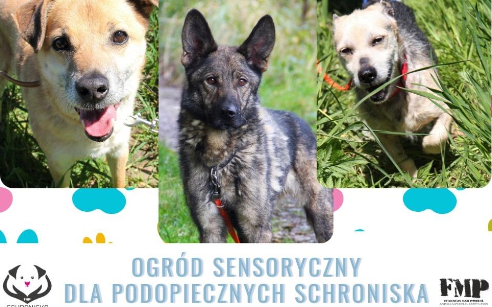 Zbiórka Ogród sensoryczny dla psów - zdjęcie główne
