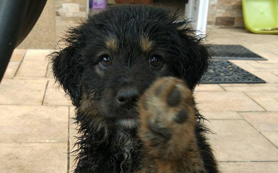 Zbiórka Zbiórka na zwierzaki! - zdjęcie główne