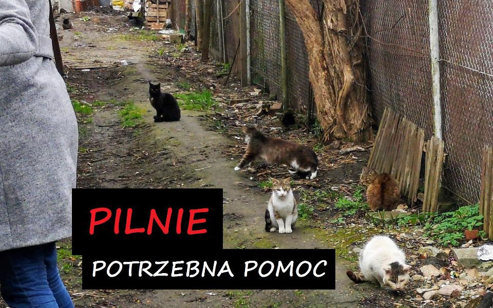 Zbiórka Pomoc dla stada z Jagodna - zdjęcie główne