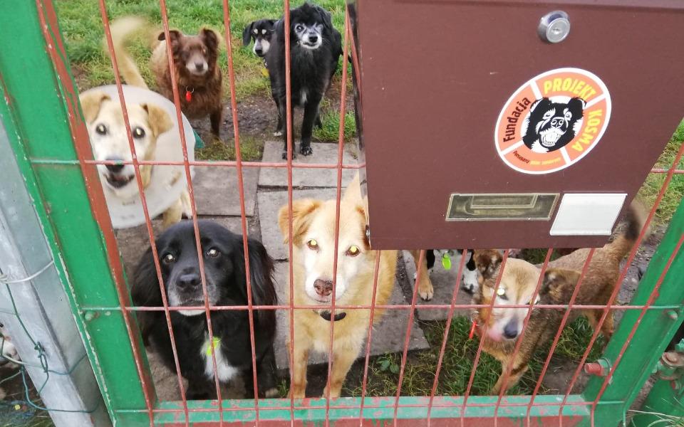 Zbiórka Na ratunek psim staruszkom - zdjęcie główne