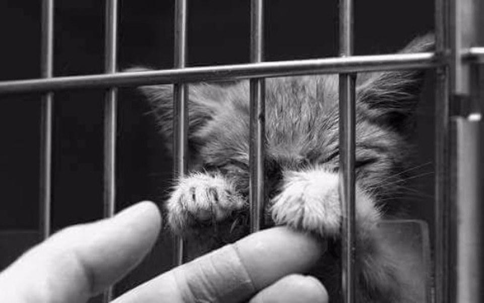 Zbiórka Karma dla bezdomnych kotów - zdjęcie główne