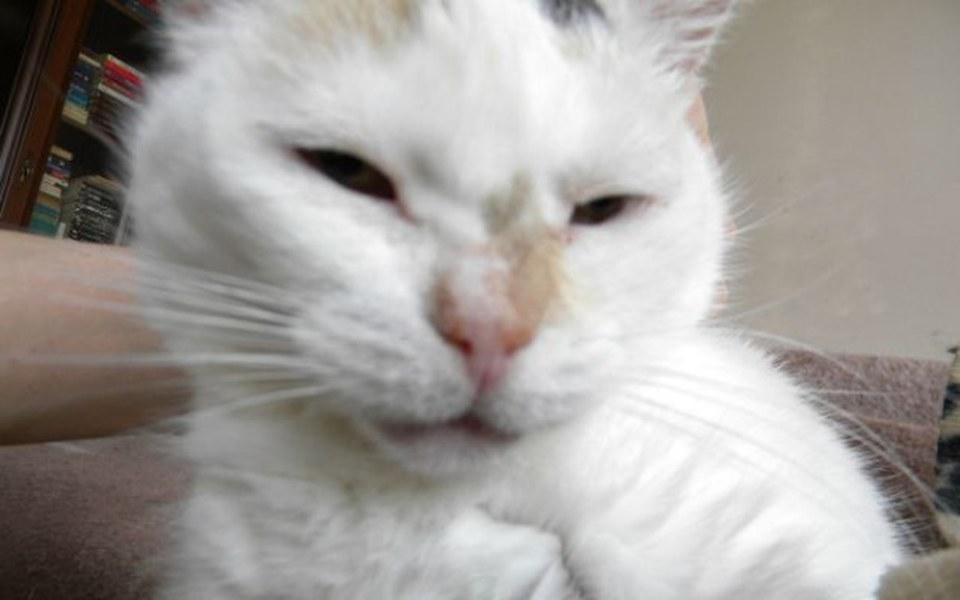 Zbiórka Stara kotka z guzami. - zdjęcie główne