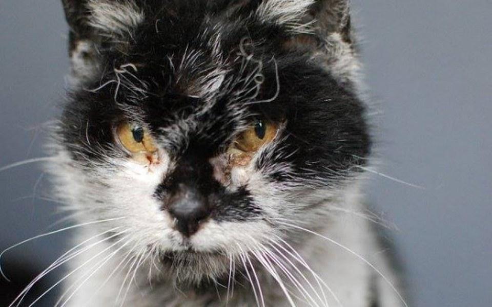 Zbiórka Kocia staruszka walczy o życie - zdjęcie główne