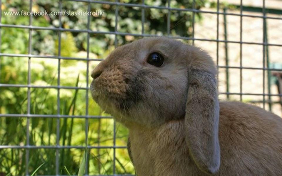 Zbiórka SOS! Remont króliczoka! - zdjęcie główne