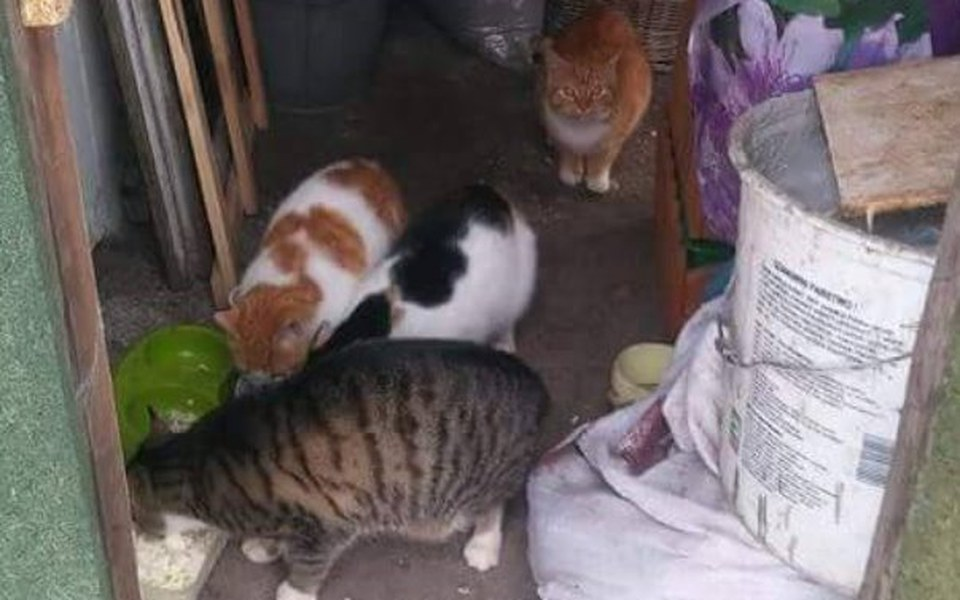Zbiórka Na sterylkę  wolnożyjących kotek - zdjęcie główne
