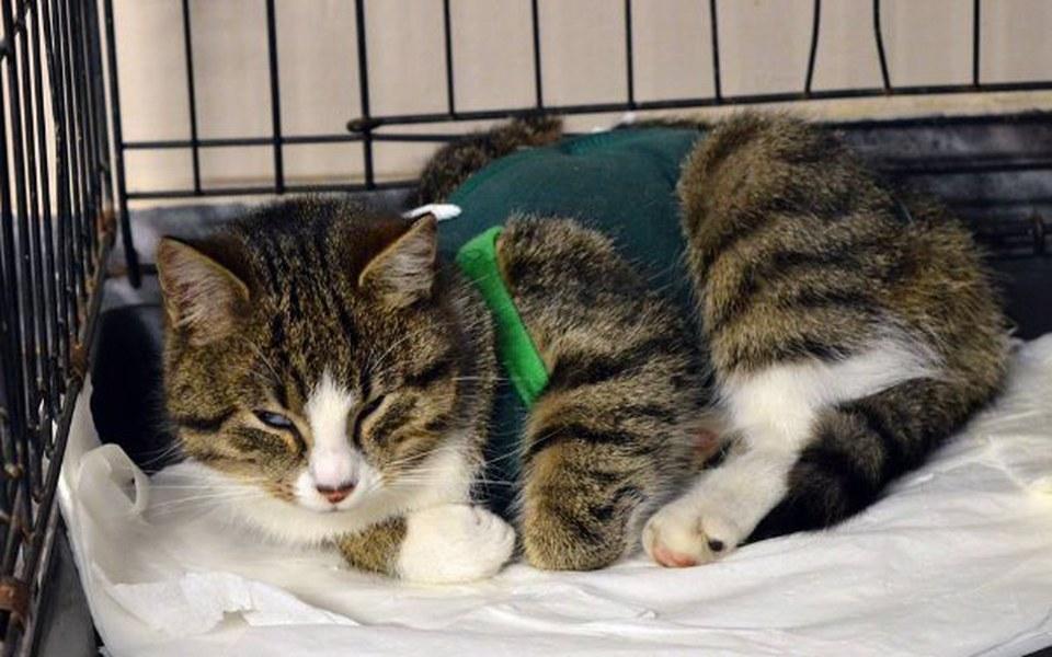 Zbiórka Kocia niedola - bezdomne i chore - zdjęcie główne