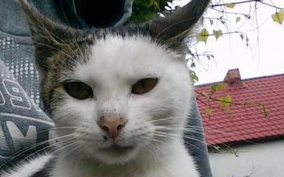 Zbiórka pomoc dla bezdomnej kotki - zdjęcie główne