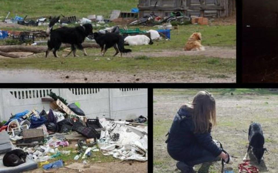 Zbiórka Zwierzęta z Białołęki - zdjęcie główne
