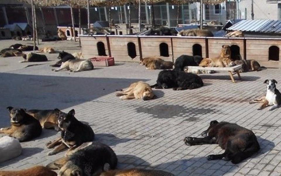 Zbiórka Wybieg dla psich staruszków - zdjęcie główne