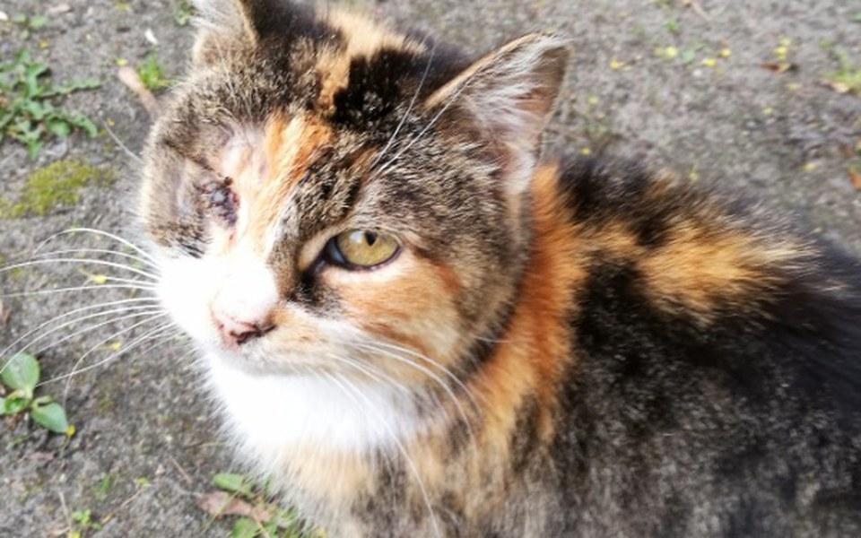 Zbiórka Jednooka kotka potrzebuje pomocy - zdjęcie główne