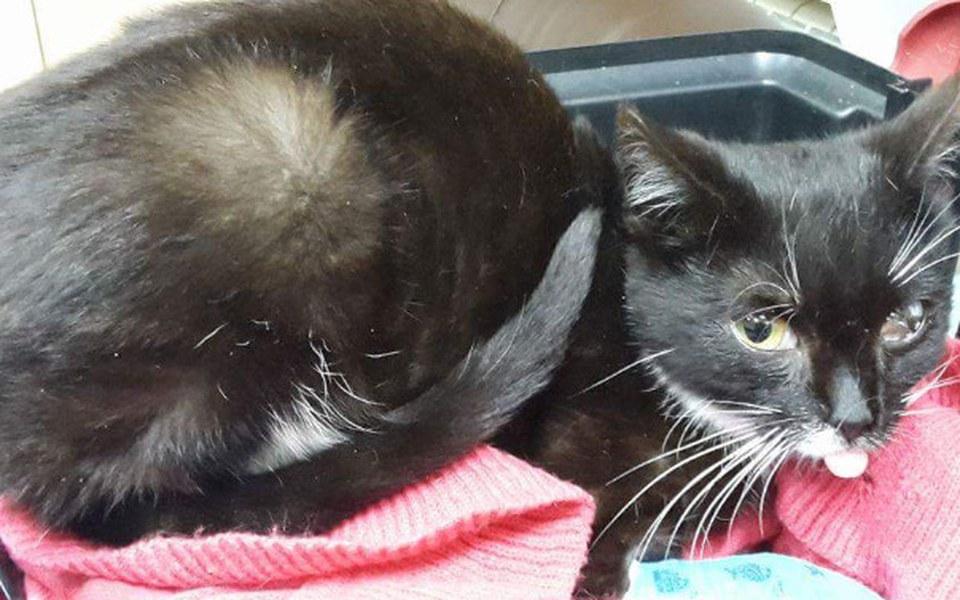Zbiórka Chora kotka walczy o życie! - zdjęcie główne
