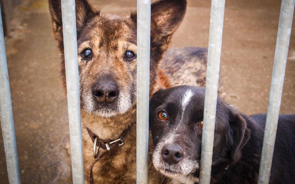 Zbiórka Staruszkowy Psi Raj - zdjęcie główne