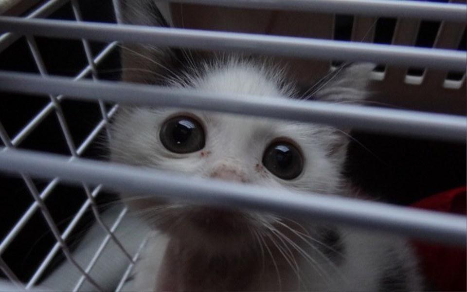Zbiórka Małe kocie serduszko do ogrzania - zdjęcie główne