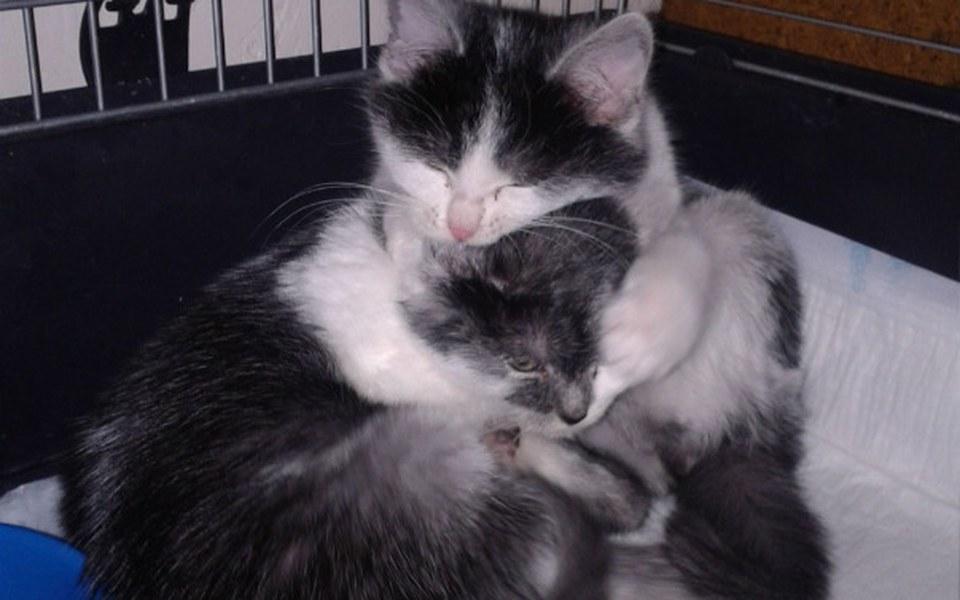 Zbiórka Złotówka na koci szpitalik - zdjęcie główne