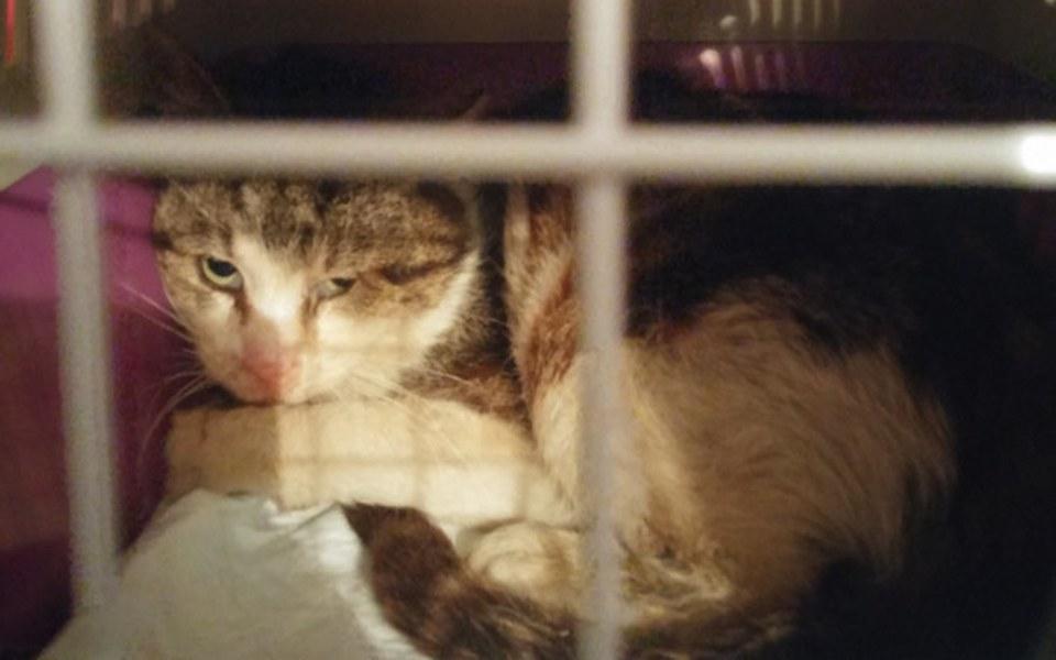 Zbiórka Koty Spod Bloku - zdjęcie główne