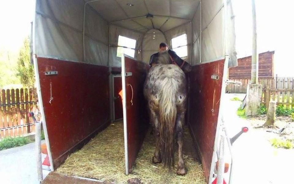 Zbiórka Przyczepa dla ratowanych koni - zdjęcie główne