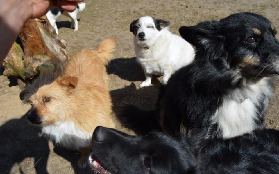 Zbiórka 33 zwierzaki-Azylowe Stado - zdjęcie główne