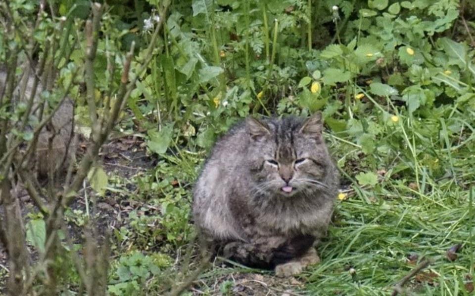 Zbiórka Dramat bezdomnych kotów - zdjęcie główne