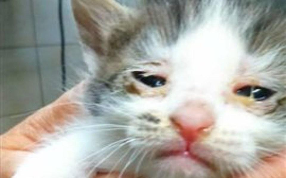 Zbiórka Kotki WYRZUCONE W WORKU-POMÓŻCIE - zdjęcie główne