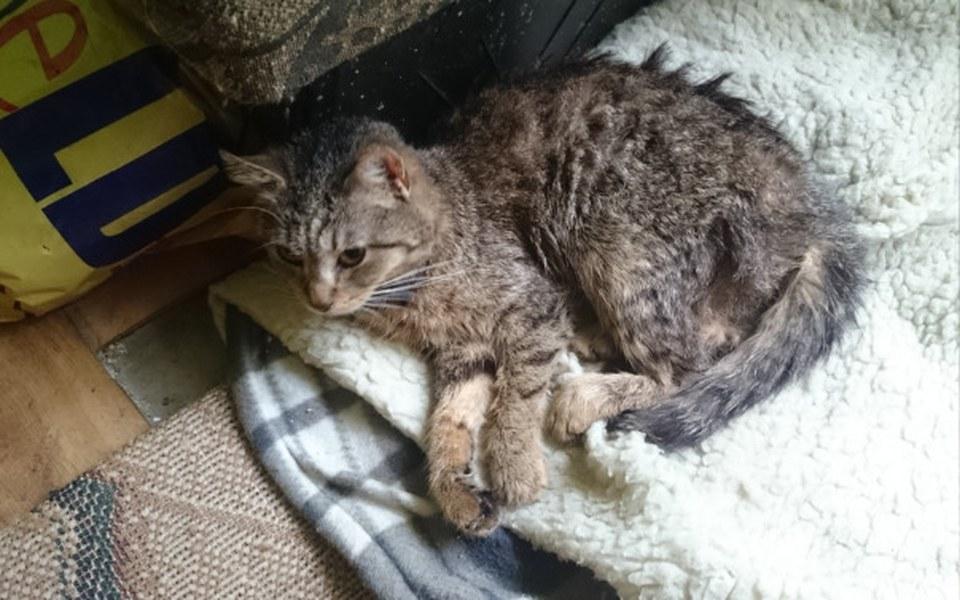 Zbiórka Operacja kotka - zdjęcie główne