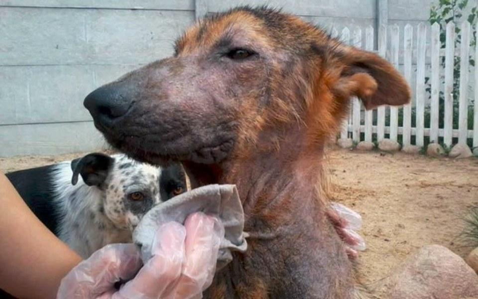 Zbiórka Tarys - niewidzialny pies - zdjęcie główne