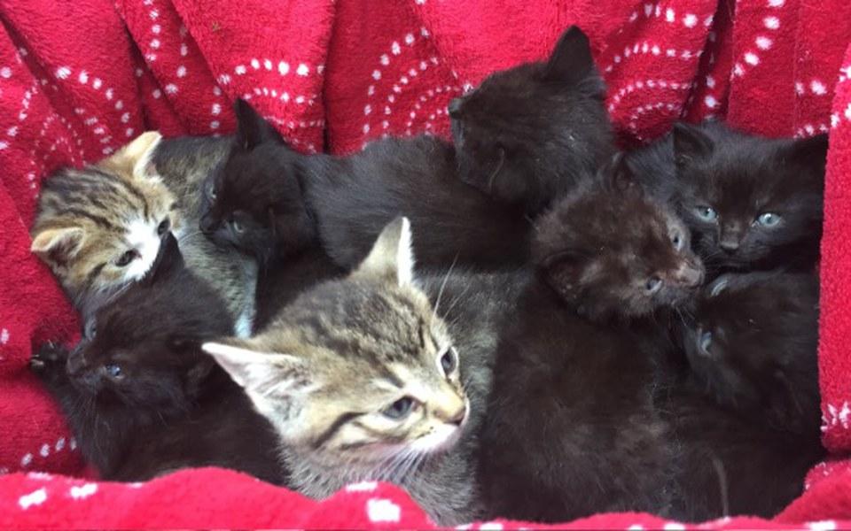 Zbiórka 24 potrzebujące kociaki - zdjęcie główne