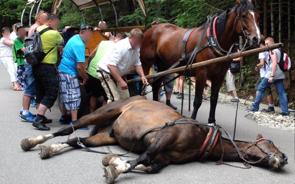 Zbiórka Ratujemy konie z Morskiego Oka - zdjęcie główne