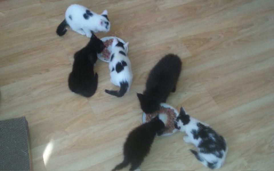 Zbiórka Koty z Cyganki Przeżyły Atak - zdjęcie główne