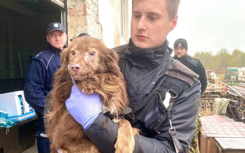 Zbiórka Azyl dla odbieranych zwierząt - zdjęcie główne