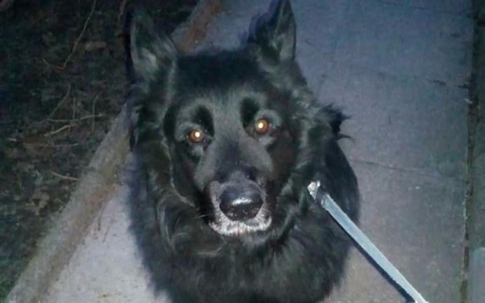 Zbiórka Leczenie ukochanego psa,Pedra - zdjęcie główne