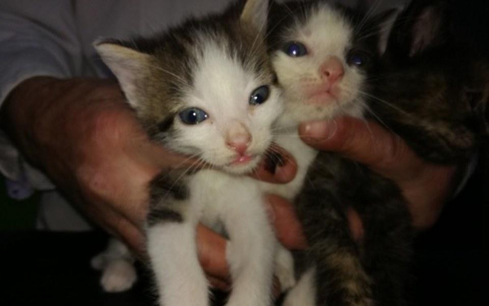 Zbiórka TOZ PROSI  Jedzenie dla kociaków - zdjęcie główne