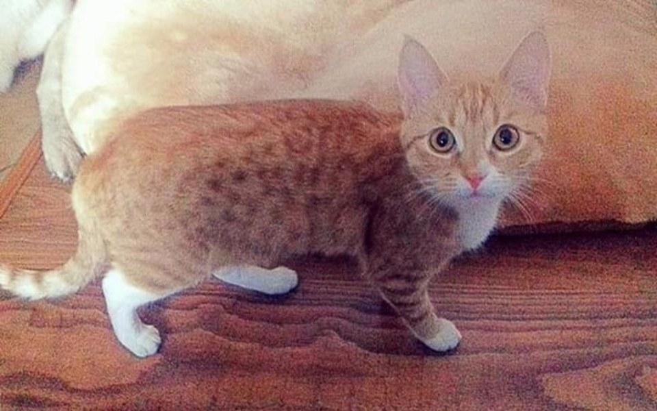 Zbiórka Sterylizacja kotki - zdjęcie główne