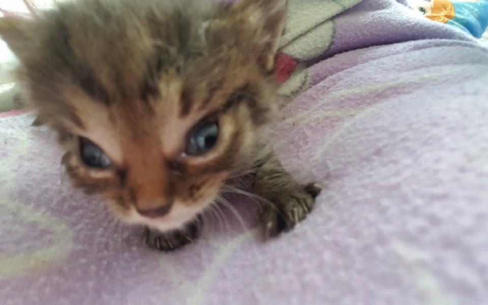 Zbiórka 4 tygodniowy kotek chce żyć - zdjęcie główne