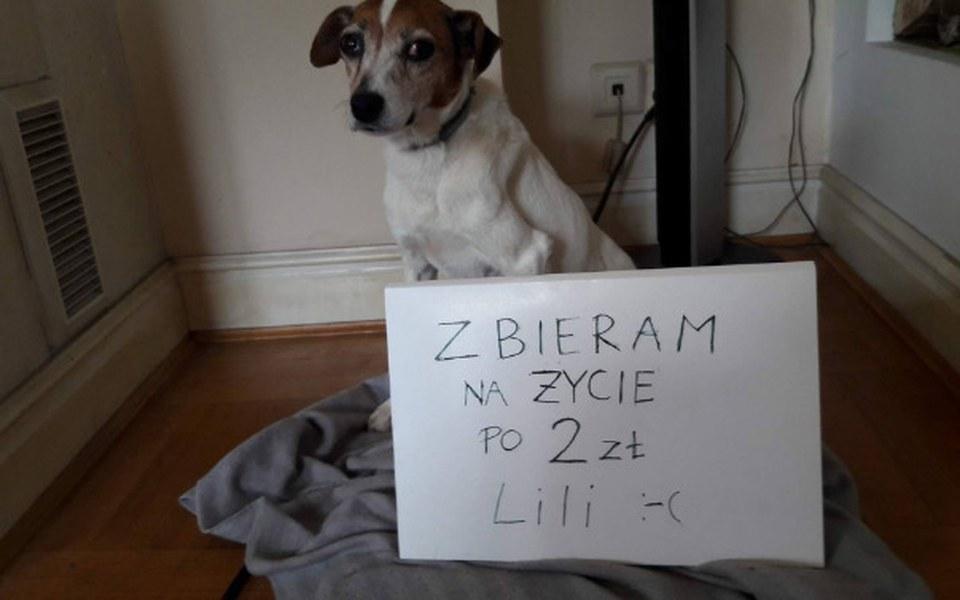 Zbiórka Drugie życie Lili - zdjęcie główne