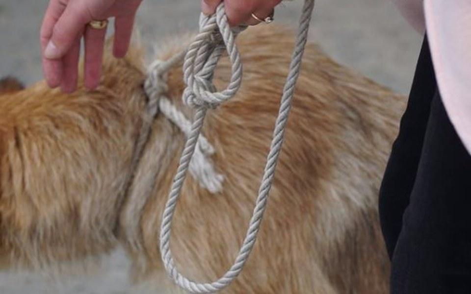 Zbiórka Przywiązana sznurem sunia - zdjęcie główne