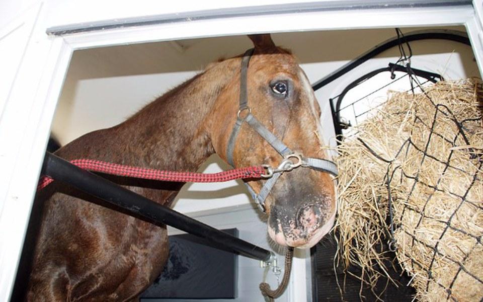 Zbiórka Wypadek, śpiączka i koń - zdjęcie główne