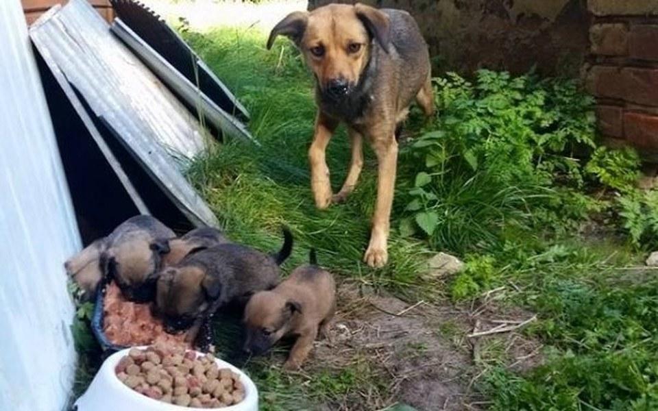 Zbiórka Suka i 6 szczeniaków - zdjęcie główne