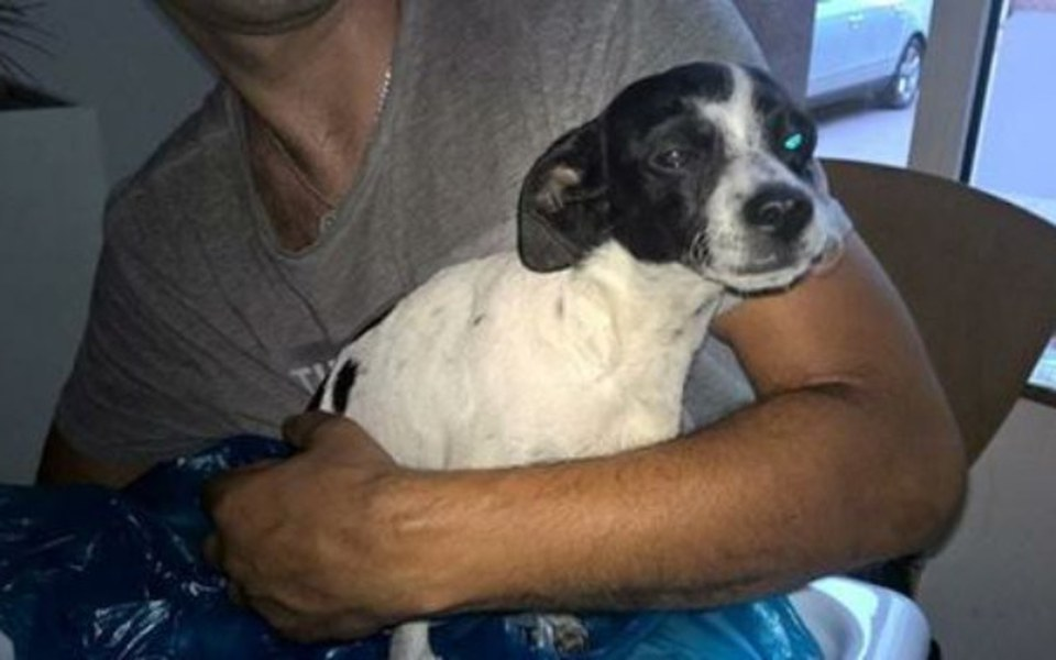 Zbiórka Pies z wypadku -szansa - zdjęcie główne