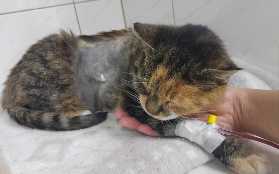 Zbiórka Skopana kotka błaga o pomoc! - zdjęcie główne