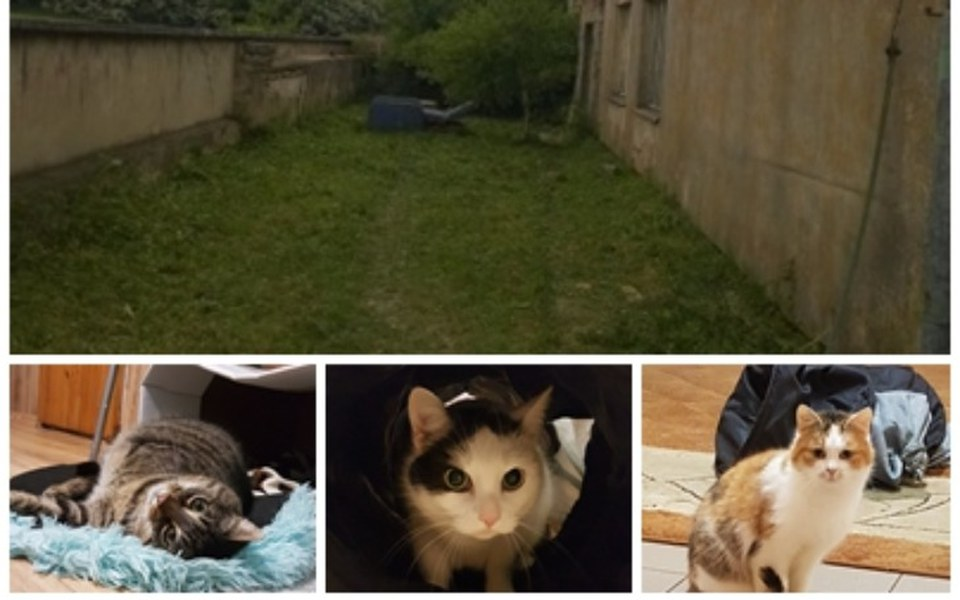 Zbiórka Budowa woliery dla kotów - zdjęcie główne