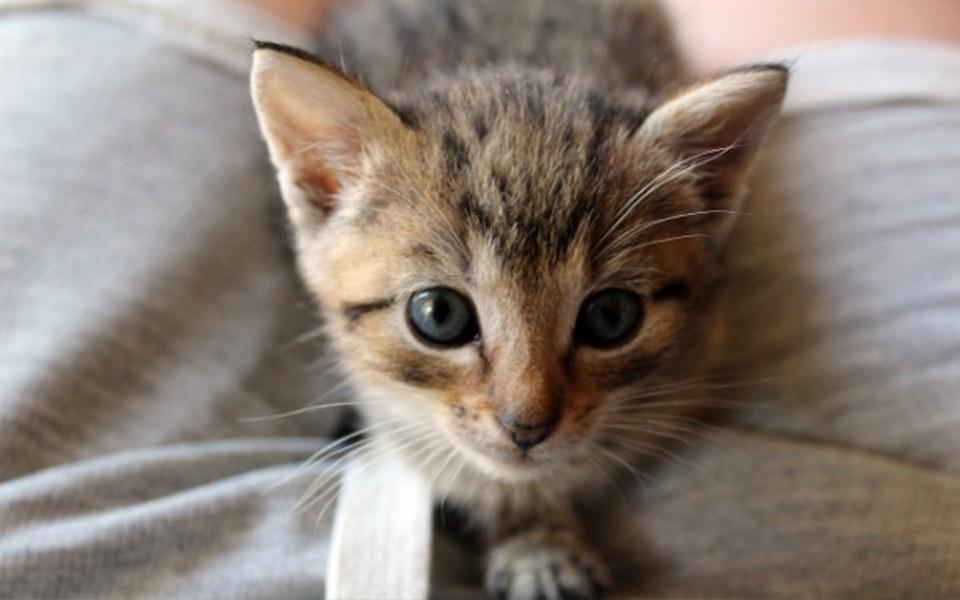 Zbiórka Kotka Cytrynka prosi o wparcie - zdjęcie główne