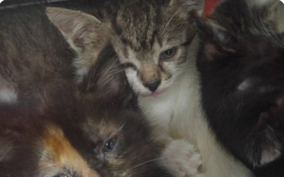 Zbiórka Koty ulicy - zdjęcie główne