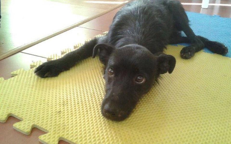 Zbiórka  Karbon. Pies skazany na śmierć. - zdjęcie główne