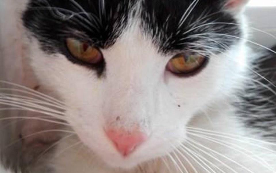 Zbiórka Zbiórka dla poszkodowanego kotka - zdjęcie główne