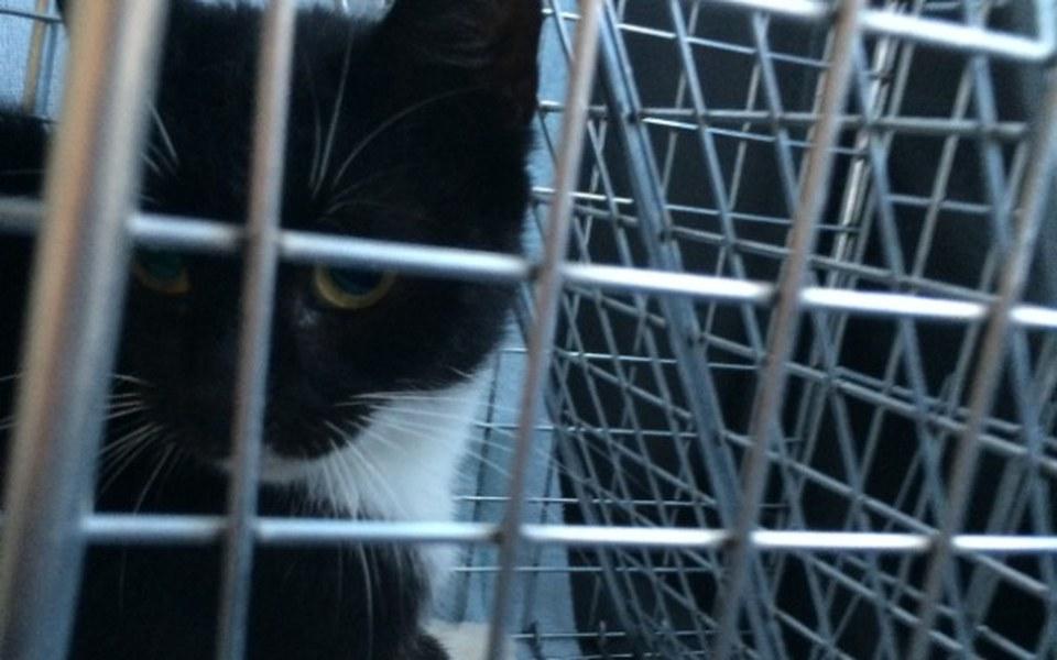 Zbiórka Klatki do odławiania kotów - zdjęcie główne